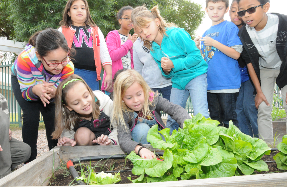Growing a Garden is a Lesson on Life for Rover Third-Graders RoverThirdGradersGarden1