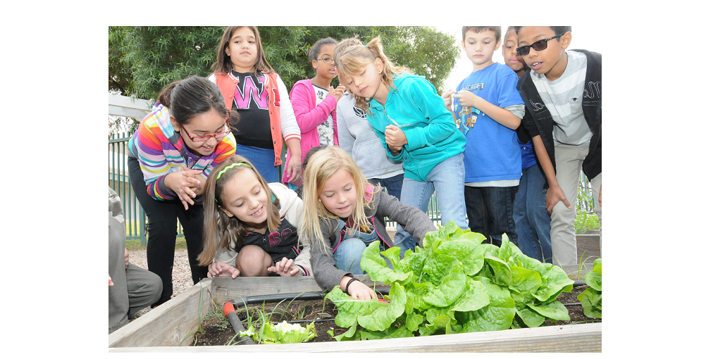 Rover Elementary Students (clockwise From Far Left) Anasofia Miranda, Renee Shackelford, Zari Danielson, Cassie Shafer, Ruqayah Sarway, Nasiriyah Thompson, Cameron Kieber, Kiersten Carlson, Dylan Bellefeuille, Aiden McKissick, And Andre Devatama Eagerly Wait Their Turn To Harvest The Lettuce In Their Garden At School. Photo Courtesy Tempe Unified School District
