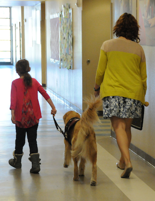 Broadmor Elementary welcomes first service dog in Tempe district Irish-BroadmorServiceDog