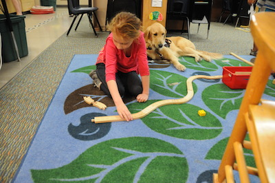 Broadmor Elementary welcomes first service dog in Tempe district Irish-BroadmorServiceDog2
