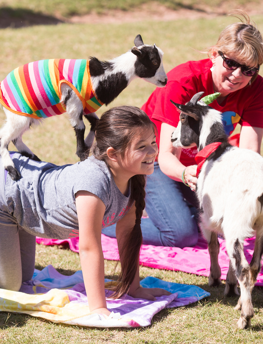 Students breathe in, bleat out with goat yoga GoatYogaX3