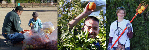 Take part in a Day of Service project to celebrate Dr. Martin Luther King Jr. Day Citrus-picking-in-Glendale